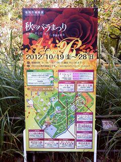 grippi_rose2012_01.jpg