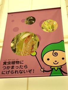 grippi_syokucyu.jpg
