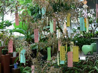 grippi_tanabata0907d.jpg